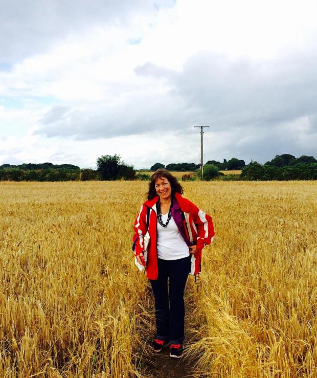 UK wheat field