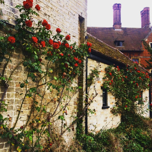 Cambridge Roses